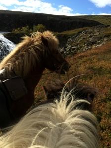 ponies-10