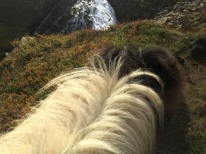 ponies-12