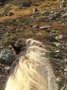 ponies-18