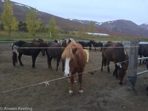 ponies 2-14