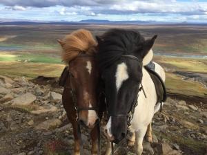 ponies-23