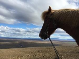 ponies-27