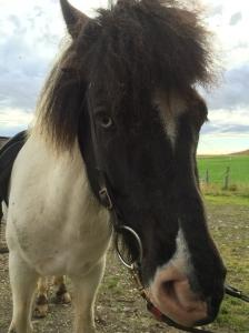 ponies-8