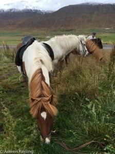Pony swap time!
